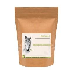 Lithotamne - Source de Calcium Cheval
