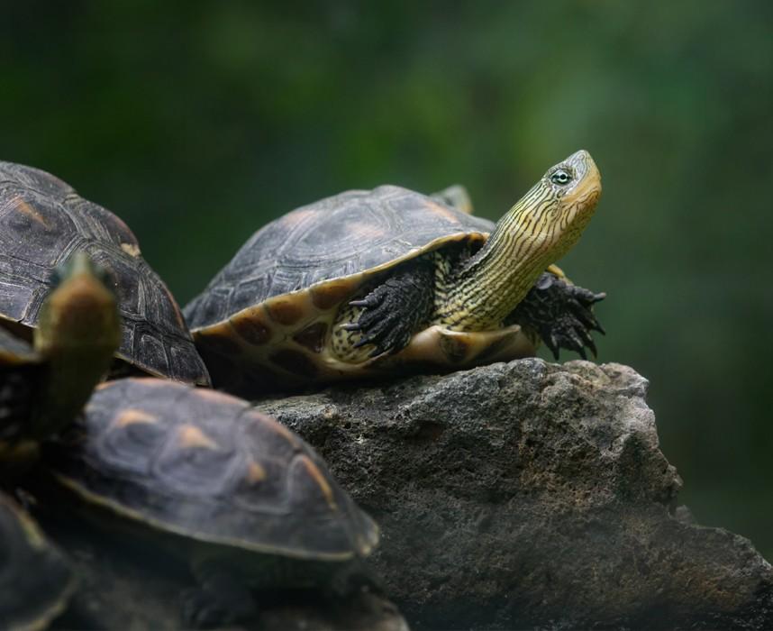 Adopter une tortue en France c'est interdit dans certains cas. Que dit la loi?