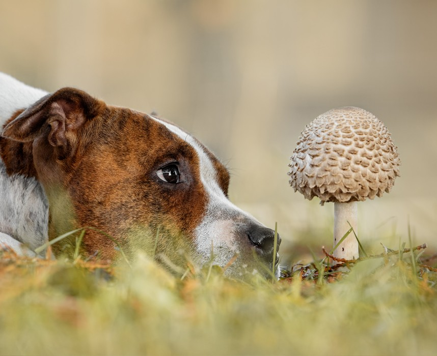 Les 10 fruits et légumes à éviter pour le bien-être de votre chien