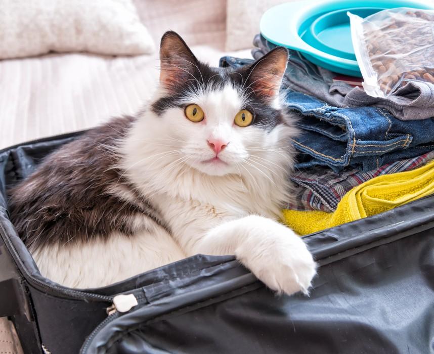 Comment vous organiser avec votre chat quand vous partez en vacances ? Ooba Ooba